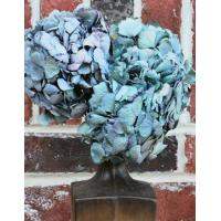 Wholesale Dried Hydrangea Flower Bunch - Blue Color from china suppliers
