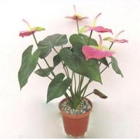 Wholesale potted flowers PAN4501-01 from china suppliers