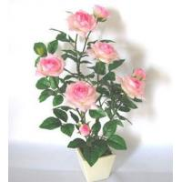 Wholesale potted flowers PRS6502-01 from china suppliers