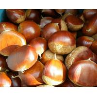 Wholesale chestnut from china suppliers