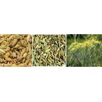 Wholesale Fennel from china suppliers