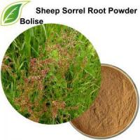 Wholesale Sheep Sorrel Root Powder from china suppliers